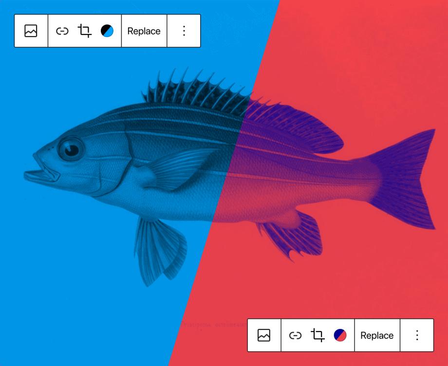 Exemplo da aplicação da bicromia no WordPress 5.8 utilizando a fotografia de um peixe dividida no meio, com uma parte em dois tons de azul e outra em vermelho e roxo.